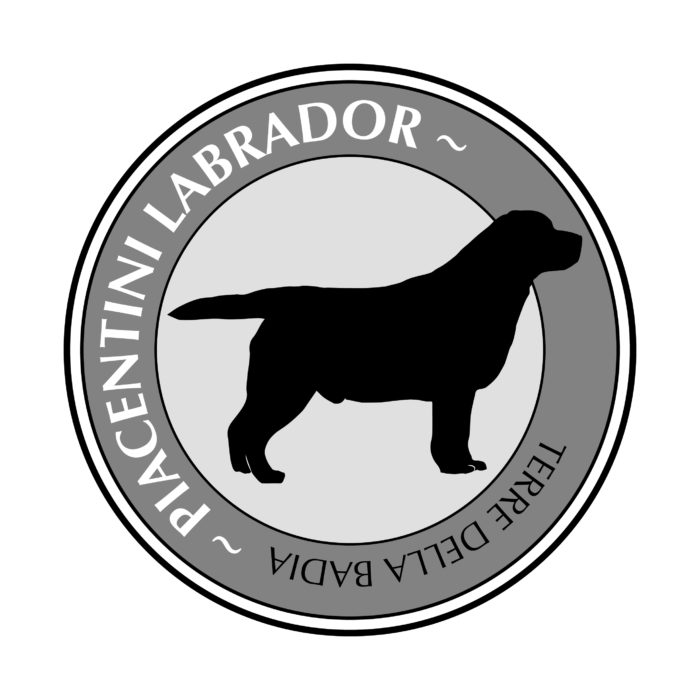 Labrador Piacentini